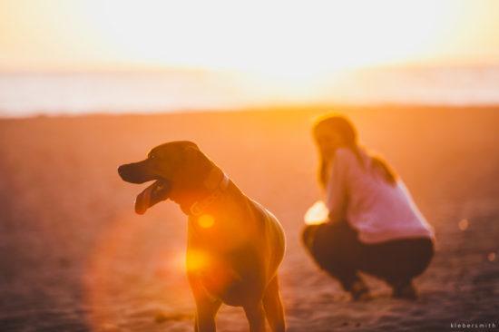 Dog Mindfulnes